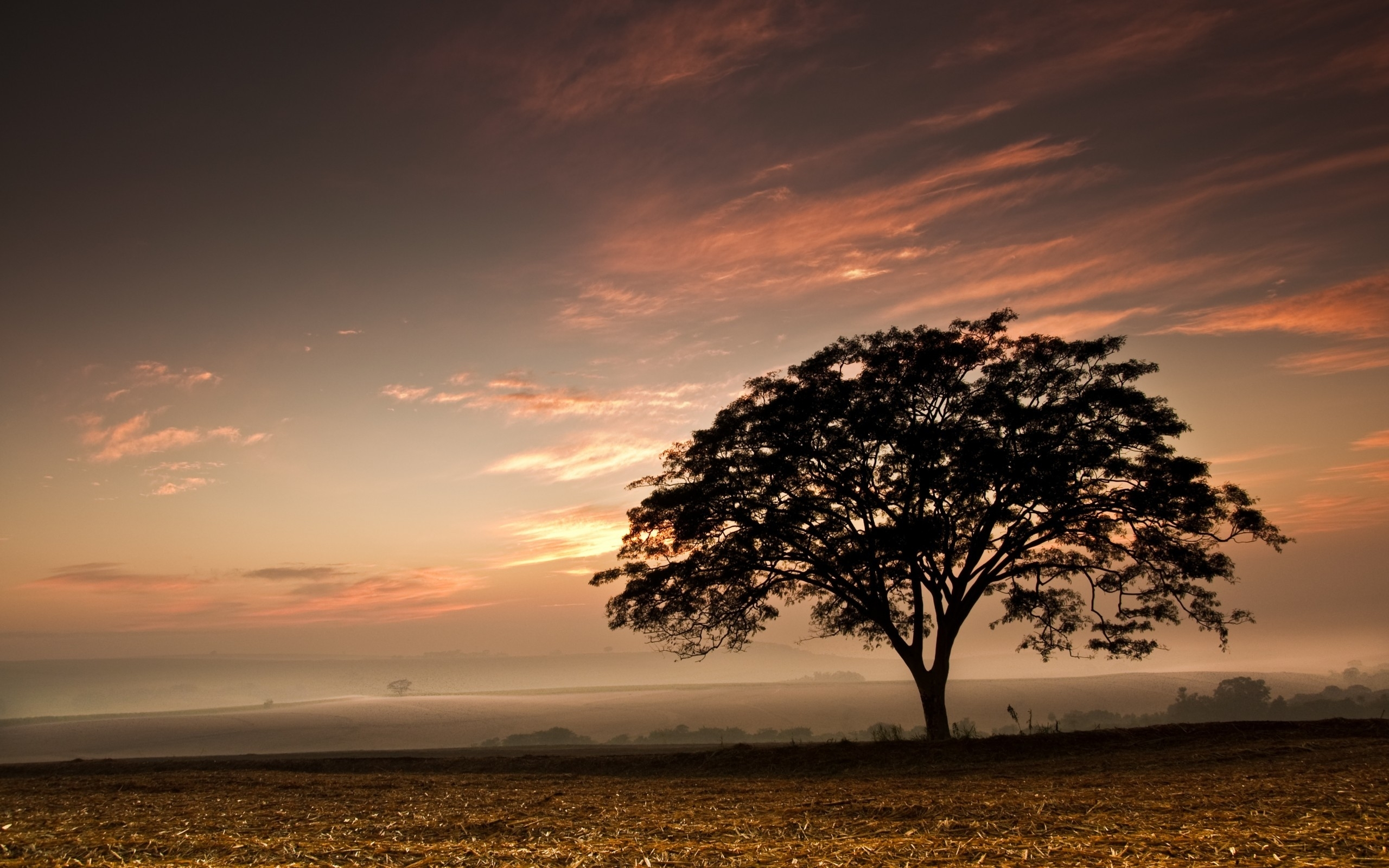 Dark Trees Hd Wallpapers: Dark Tree Harvested Field Sun Wallpapers