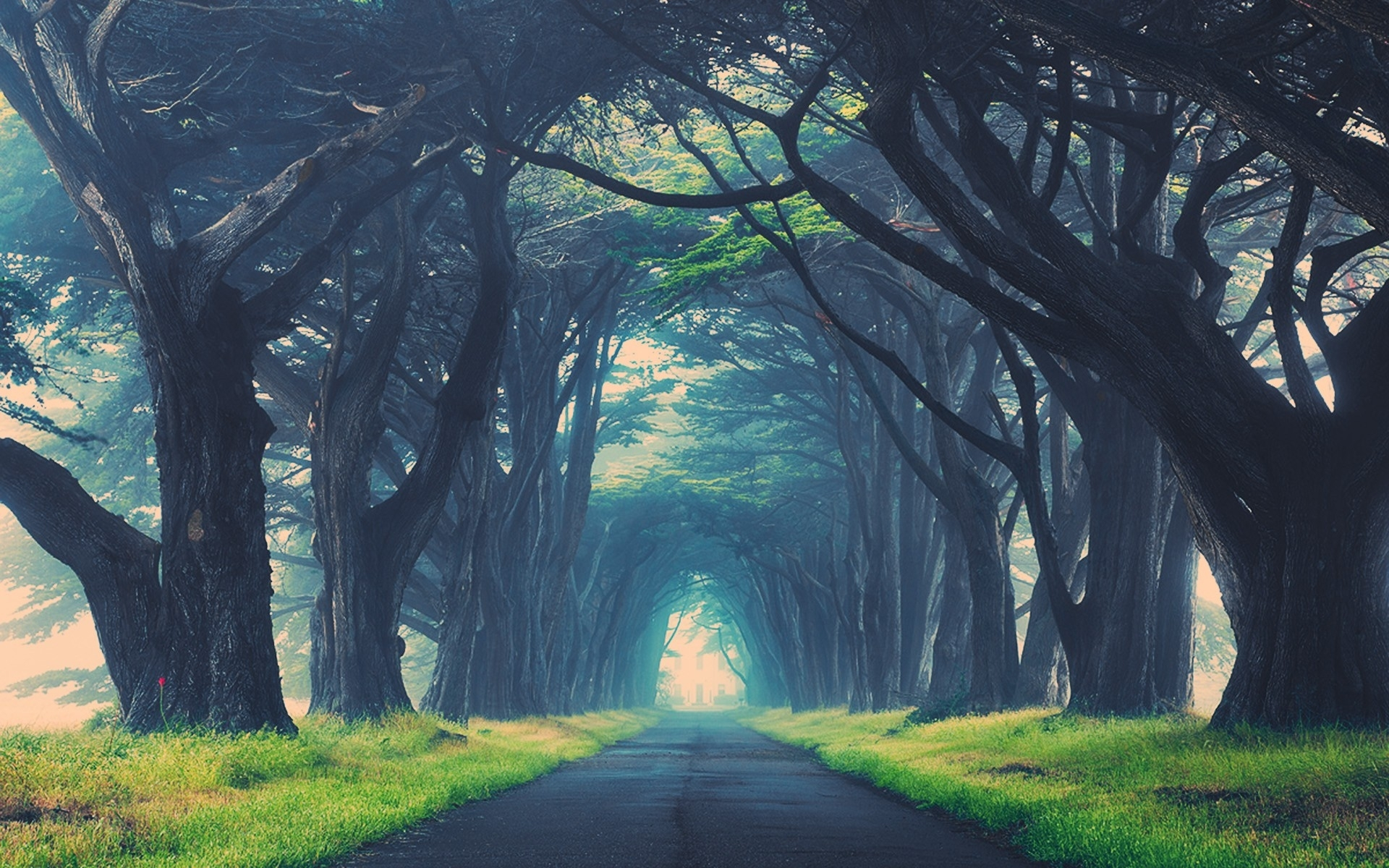 Dark Trees Hd Wallpapers: Dark Trees Avenue Stock Photos