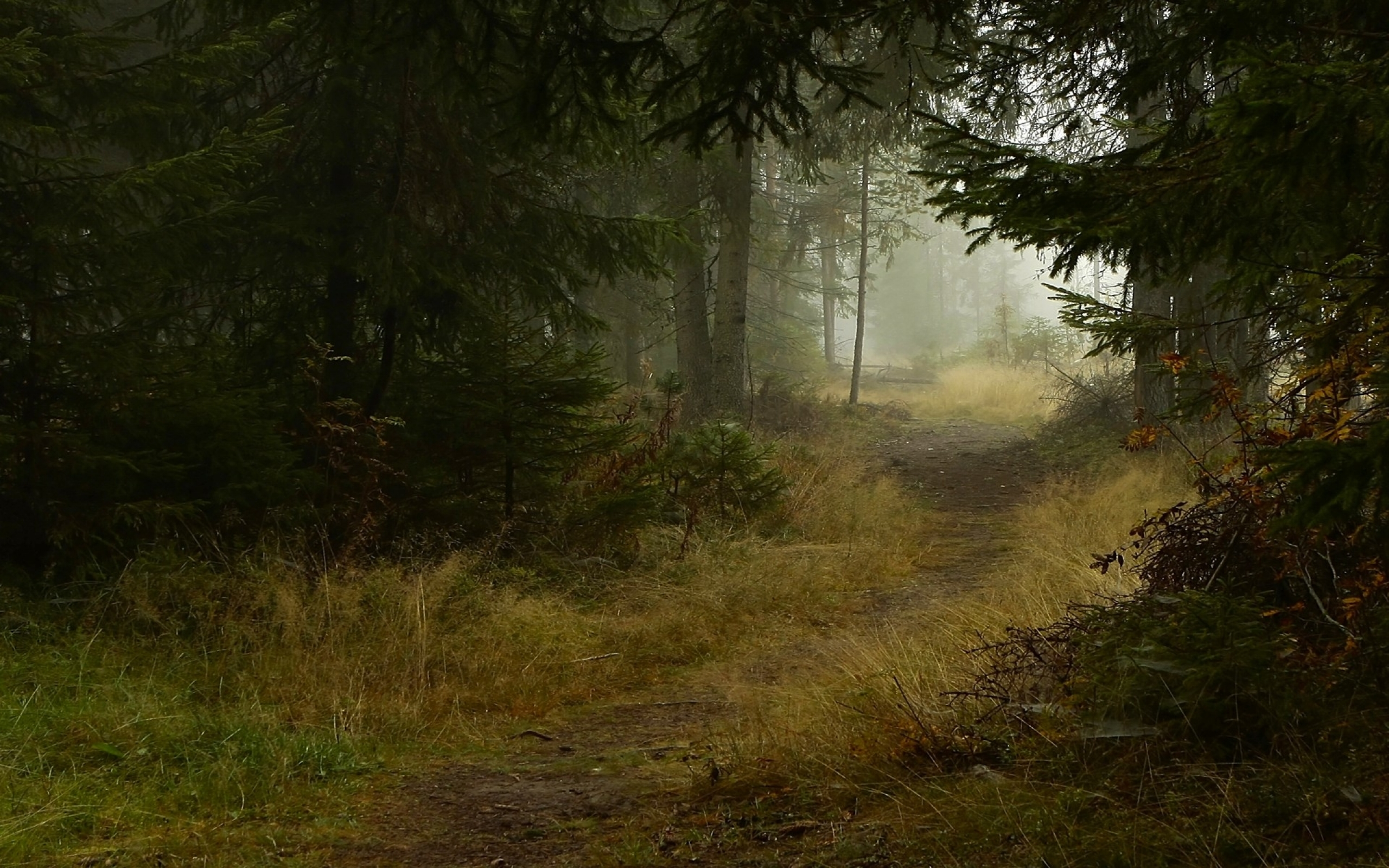2560x1600 Deep Forest Path Desktop Pc And Mac Wallpaper