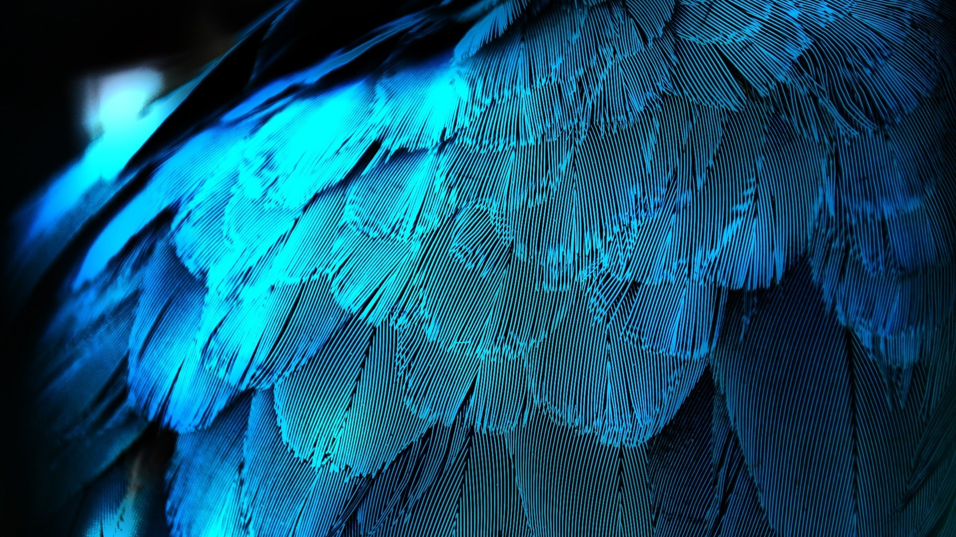 1920x1080 electric blue feathers desktop pc and mac wallpaper