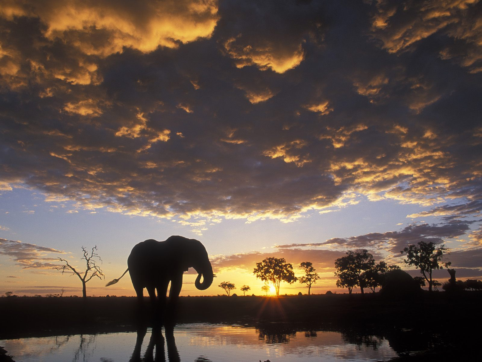 1600x1200 Elephant silhouetted desktop wallpapers and stock photos