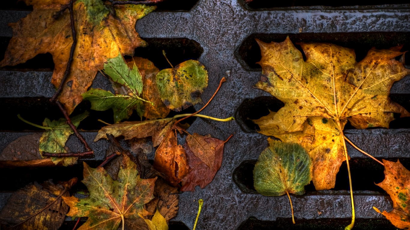 Image Result For Fall Wallpaper For Mac
