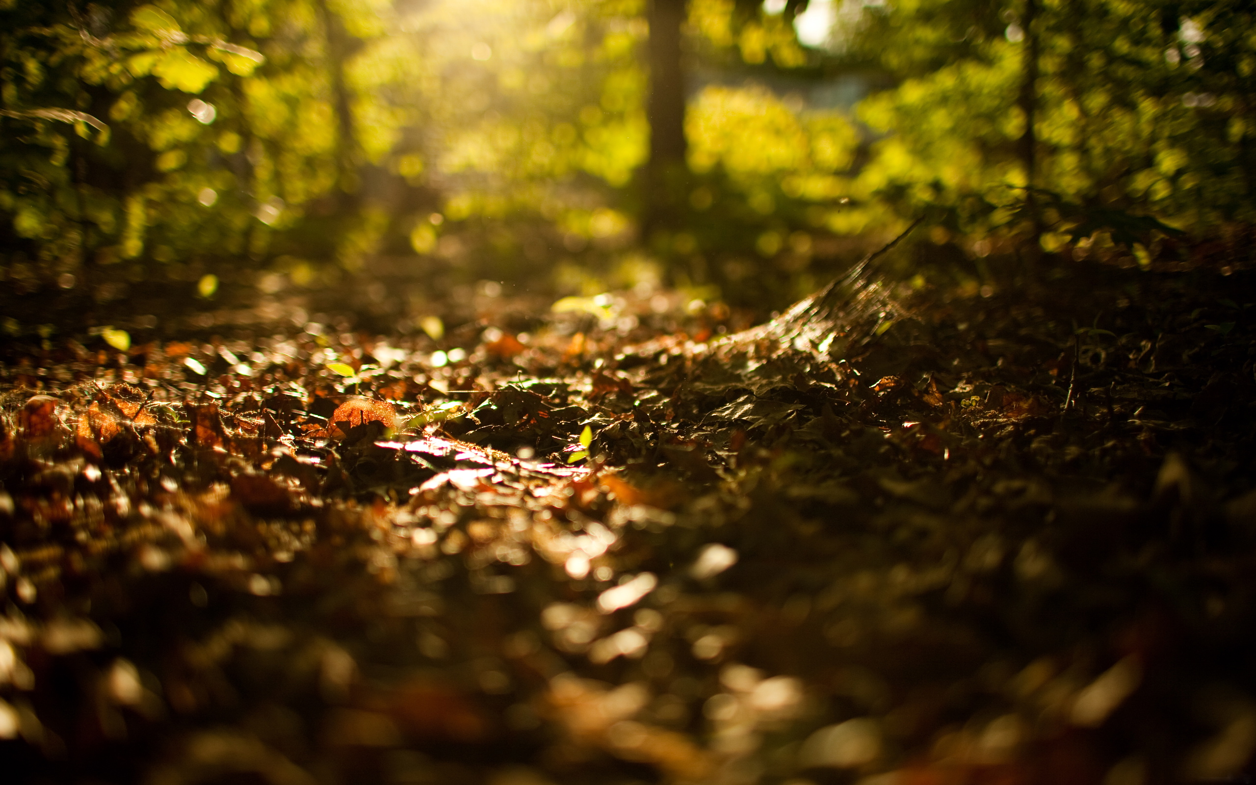 fallen leaves on forest ground wallpapers