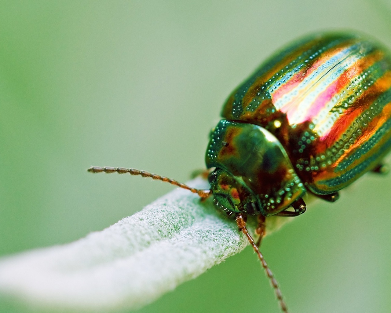 1280x1024 beetle insect - photo #2