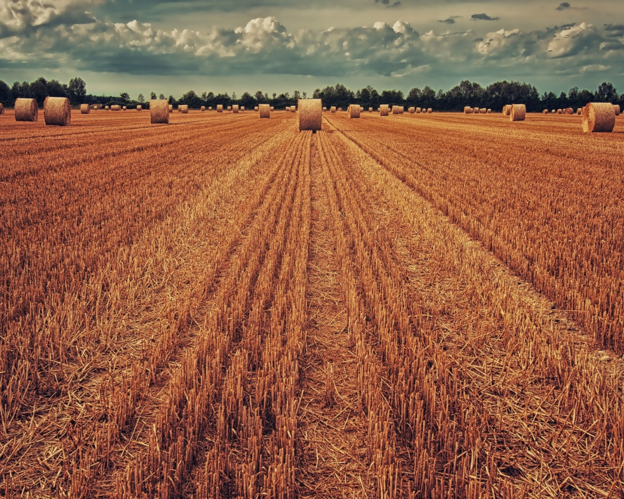 1280x1024 field, crop, wheat, hay, grass