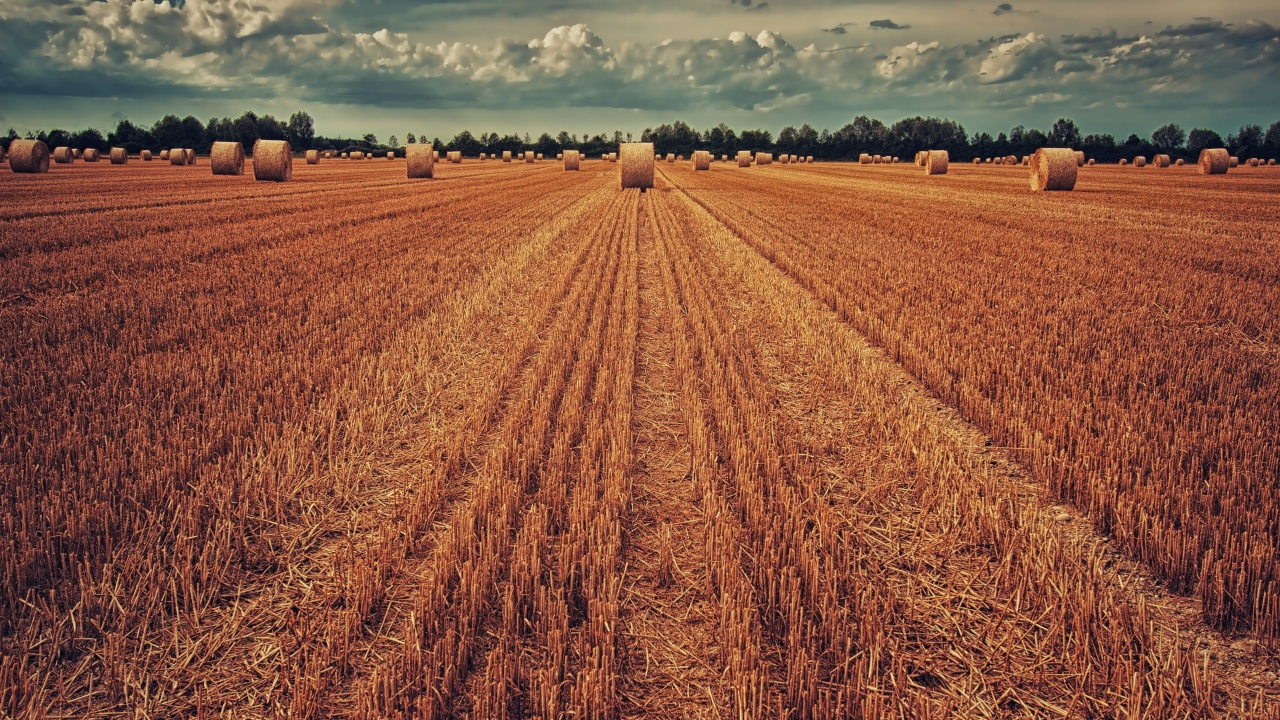 1280x720 field, crop, wheat, hay, grass