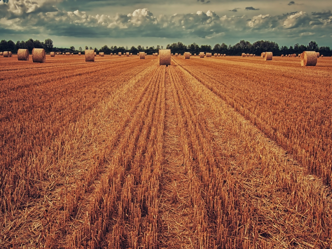 1280x960 field, crop, wheat, hay, grass