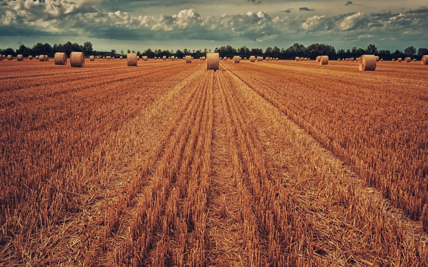 1680x1050 field, crop, wheat, hay, grass