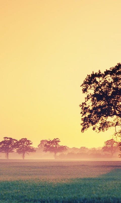 480x800 field and tree at sunset galaxy s2 wallpaper