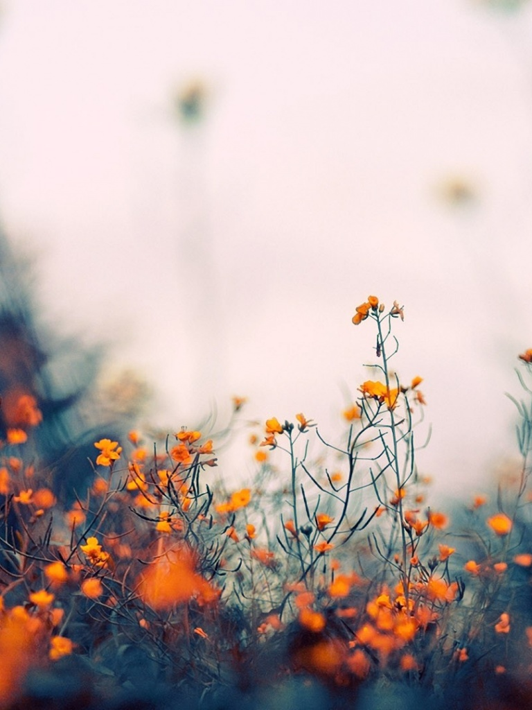 768x1024 Field Of Orange Flowers Ipad Wallpaper