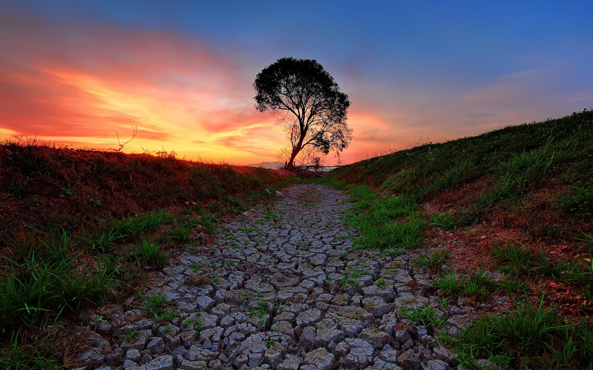 Fields Stones Path Tree Sunset Wallpapers Fields Stones