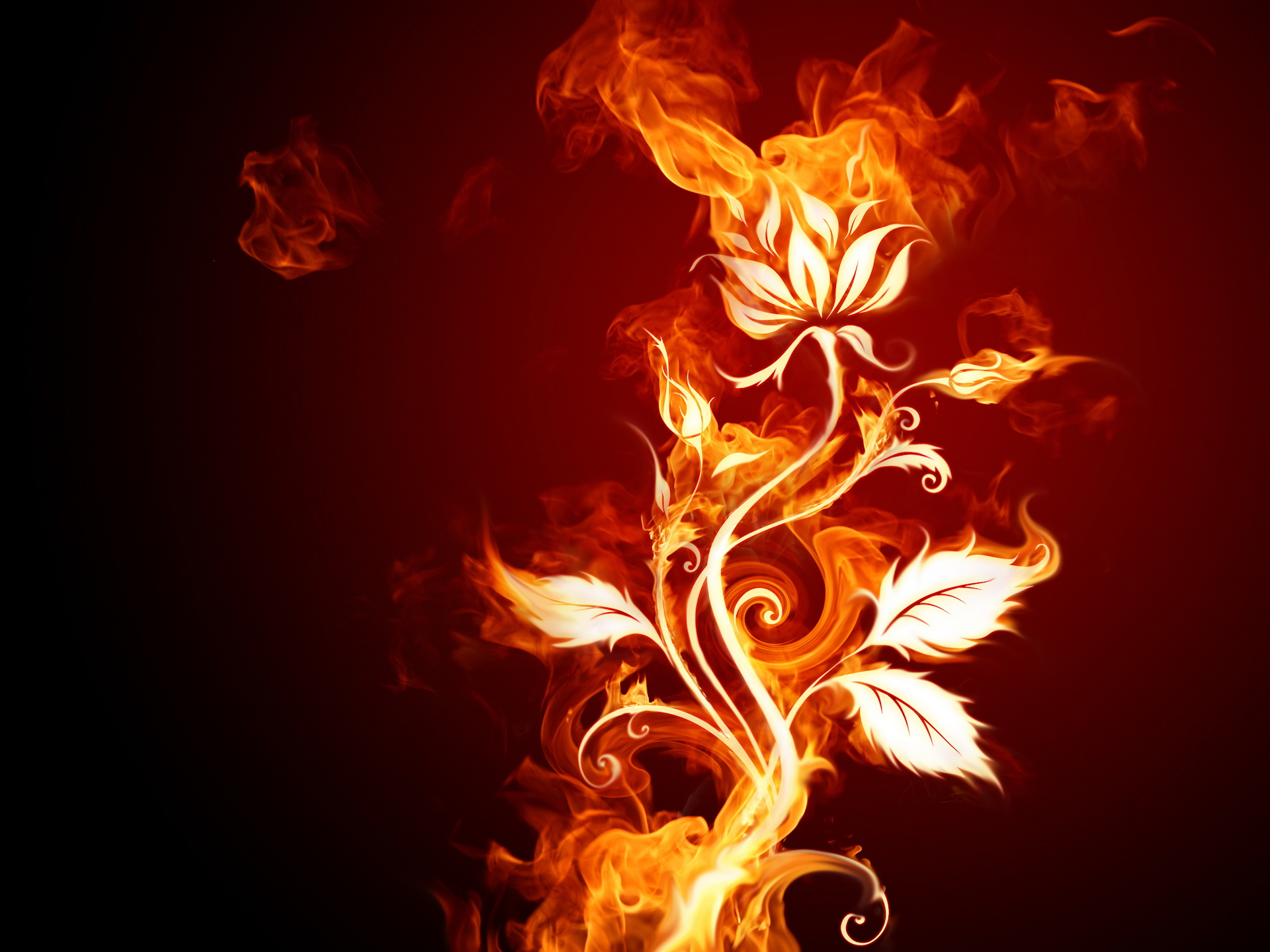 1920x1440 Fire flower desktop wallpapers and stock photos