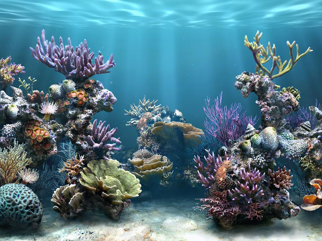 1024x768 fish tank water desktop pc and mac wallpaper for Wallpaper fish in water