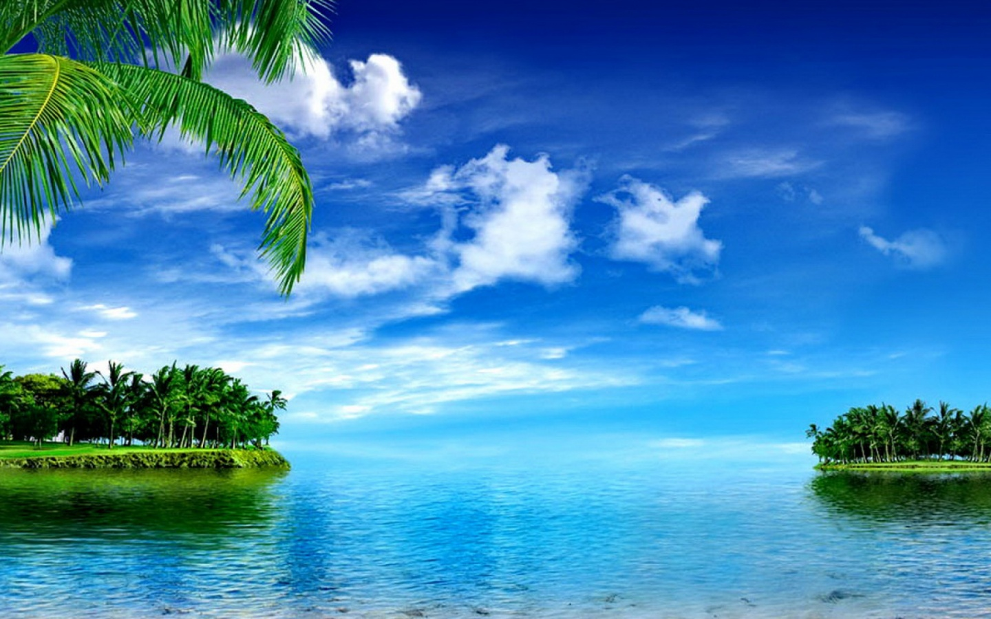 1440x900 Floating Palms