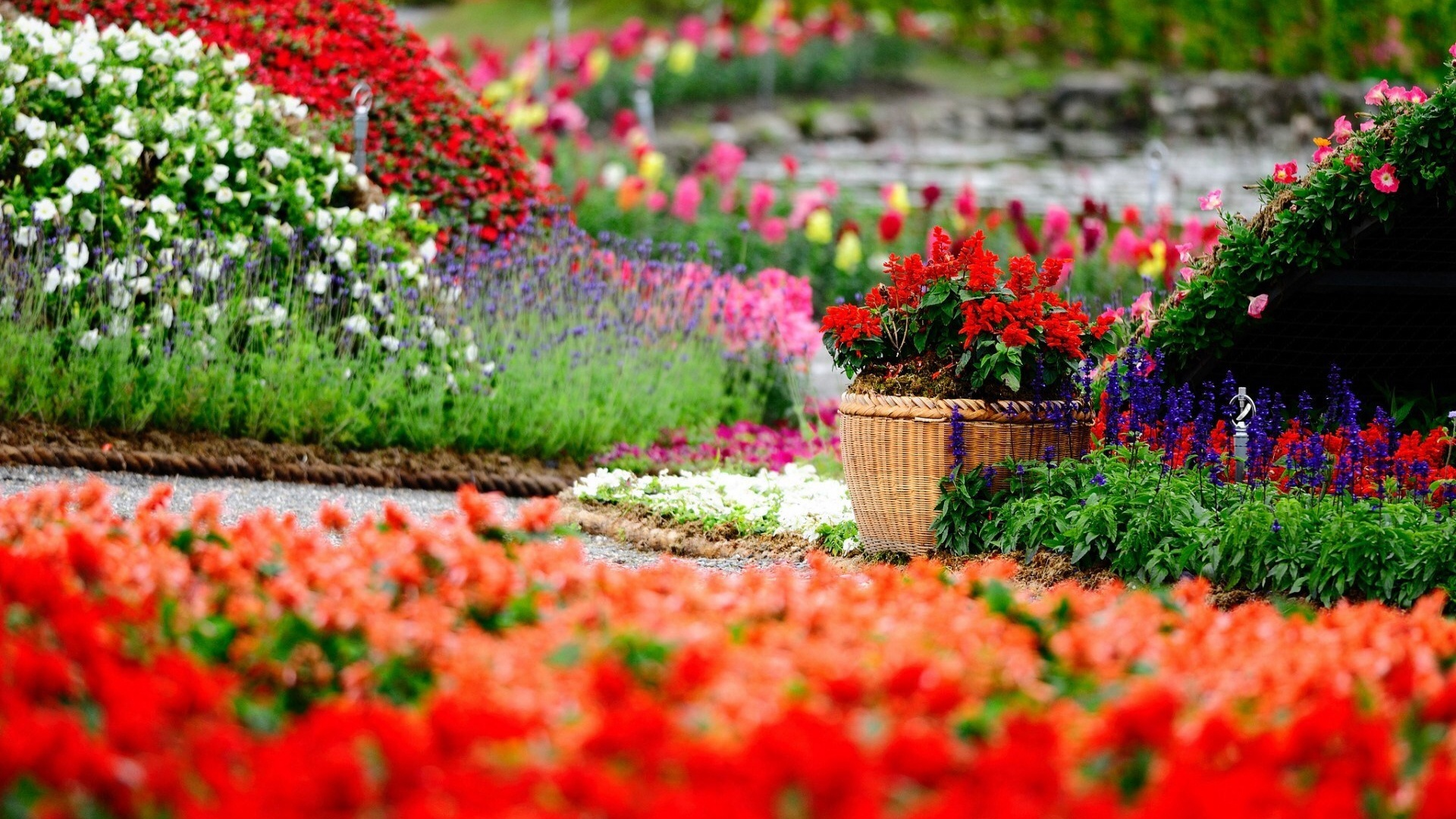 1920x1080 Flower Garden How To Set Wallpaper On Your Desktop Click The Download Link From Above And OS