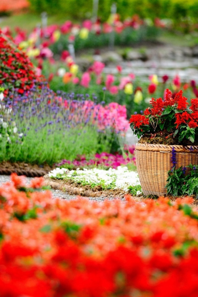 640x960 Flower Garden Iphone 4 Wallpaper