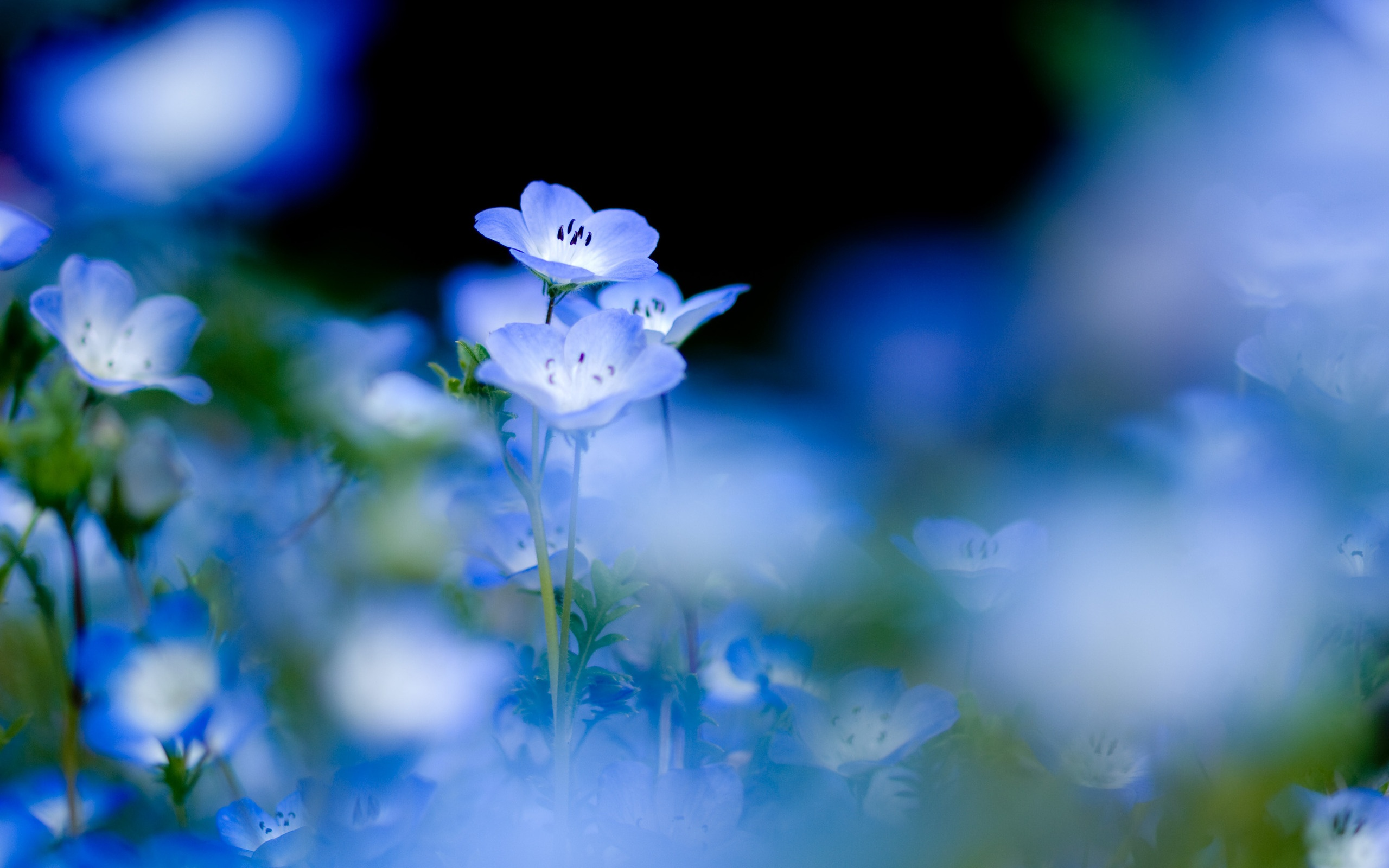 blue flowers wallpaper 1088215