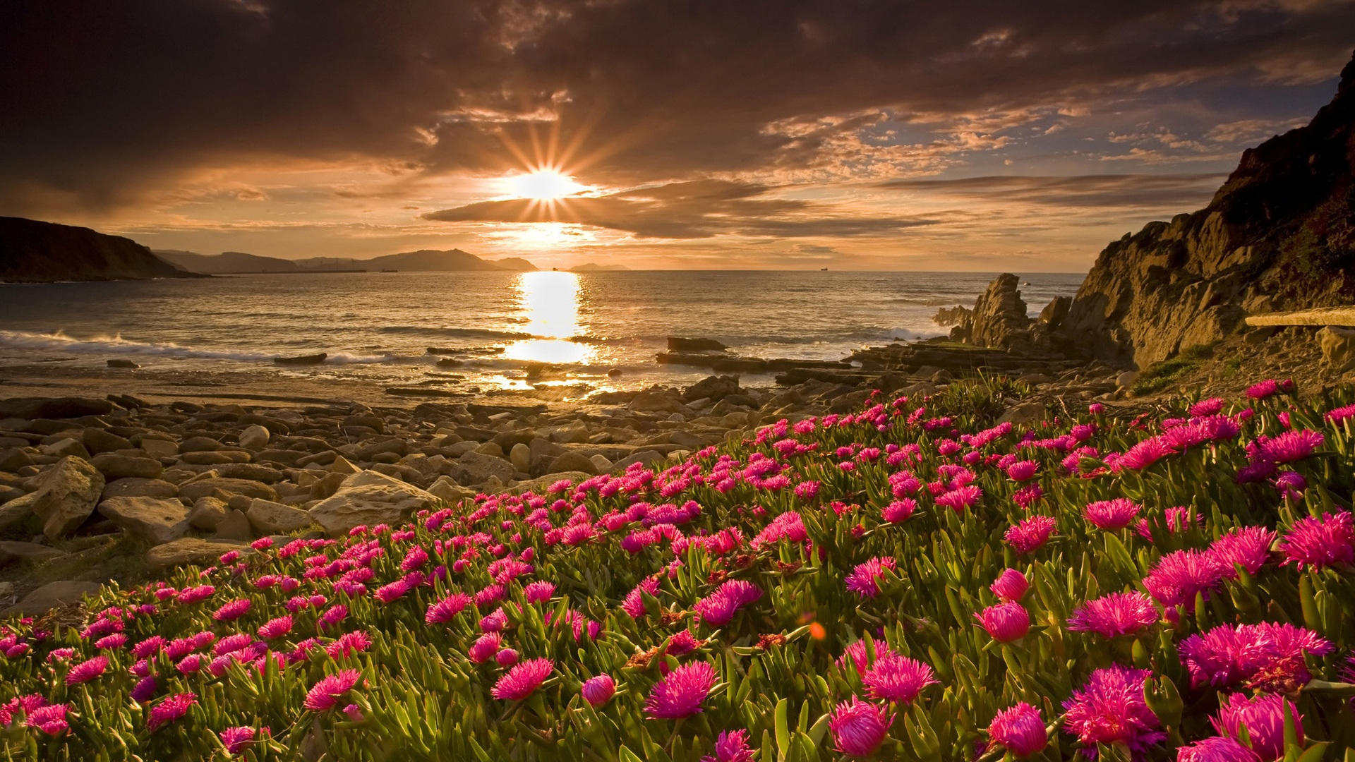 1920x1080 Flowers amp; Sunrise desktop PC and Mac wallpaper