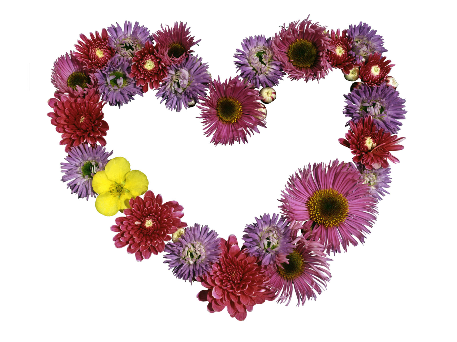 Image Flowers Heart Wallpapers And Stock Photos