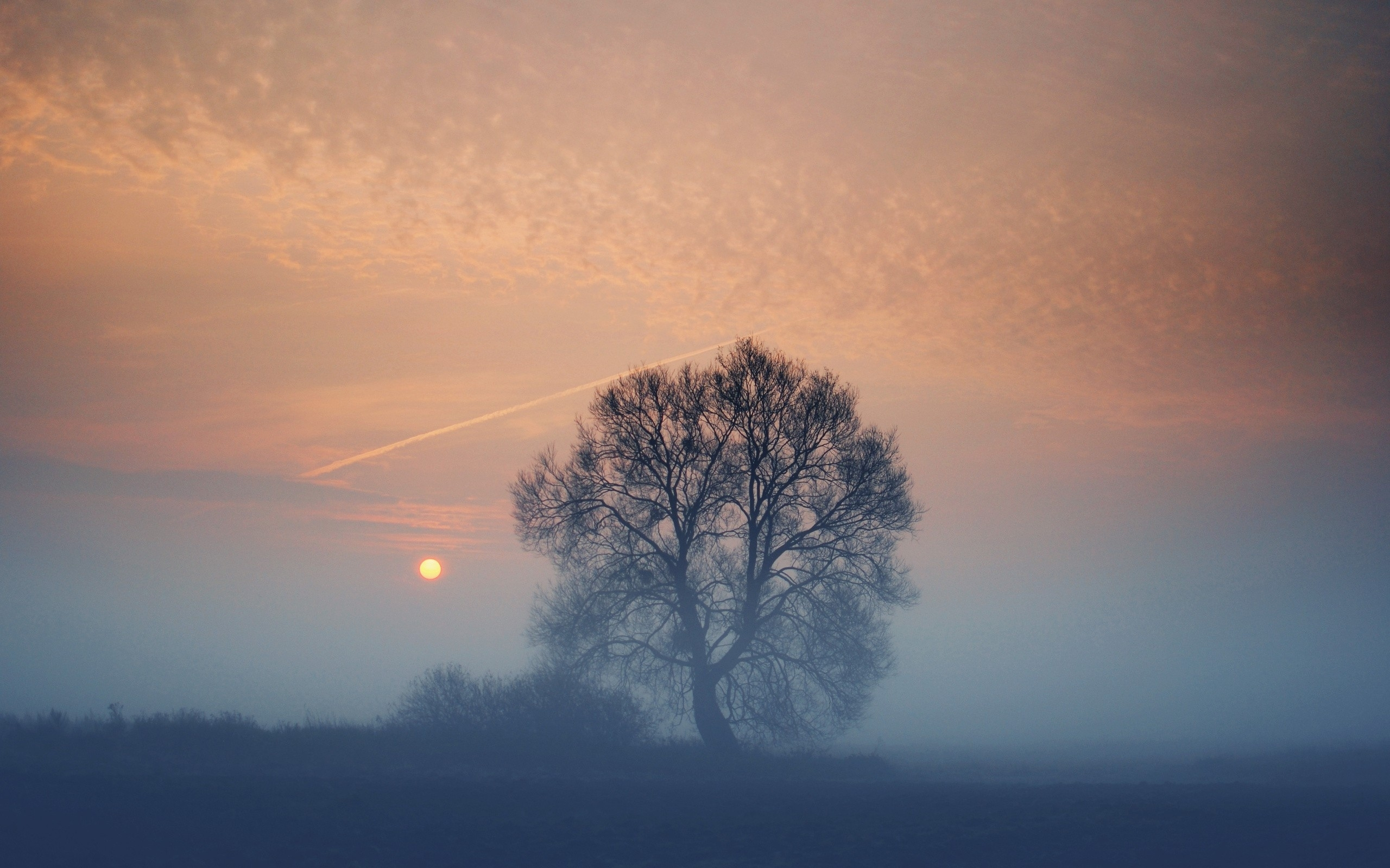 Lake Forest Sports Cars >> Foggy Sunset Tree & Field wallpapers | Foggy Sunset Tree ...