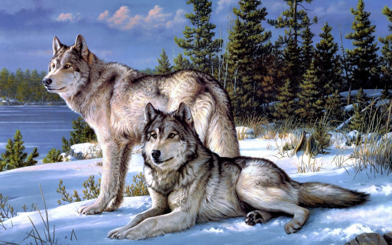 1280x800 Forest Dainty Wolves Winter