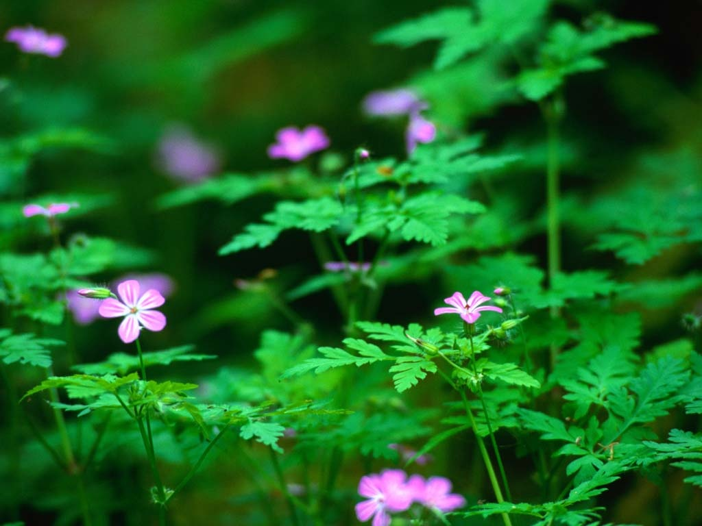 forest flowers wallpapers - photo #28