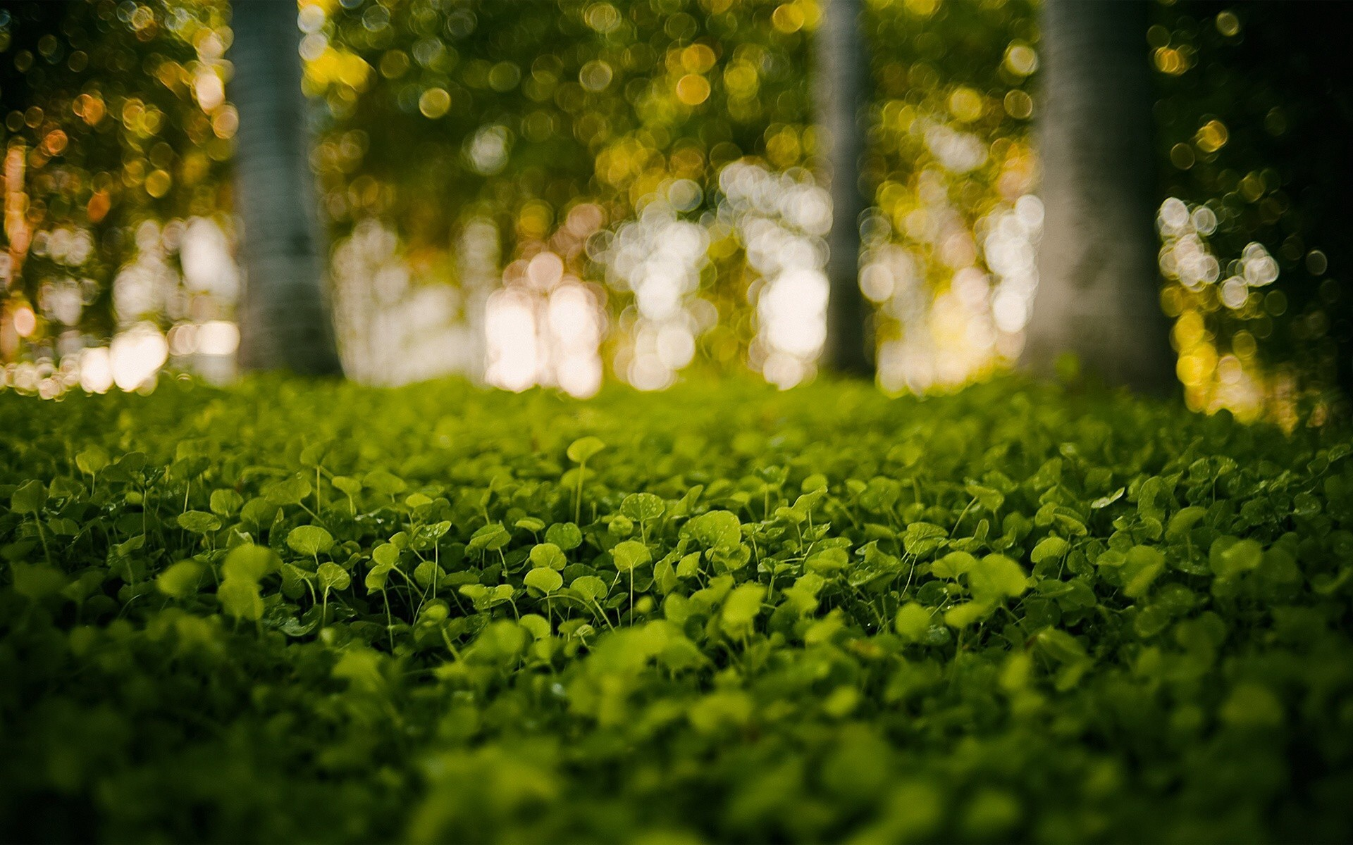 Forest Herbs wallpapers | Forest Herbs stock photos
