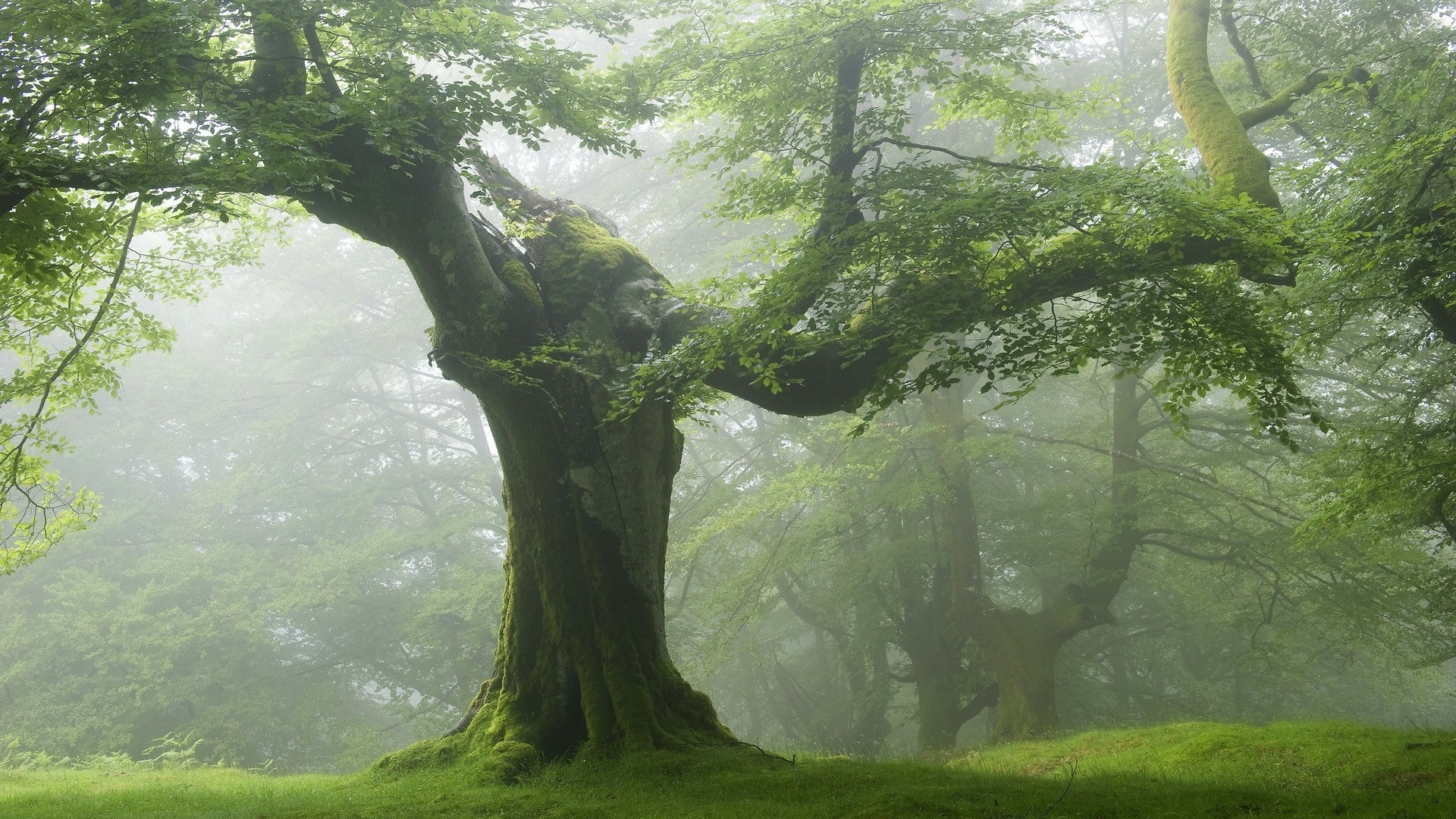 Cool Wallpaper Mac Forest - forest-old-green-trees_wallpapers_37289_1920x1080  Graphic_94990.jpg