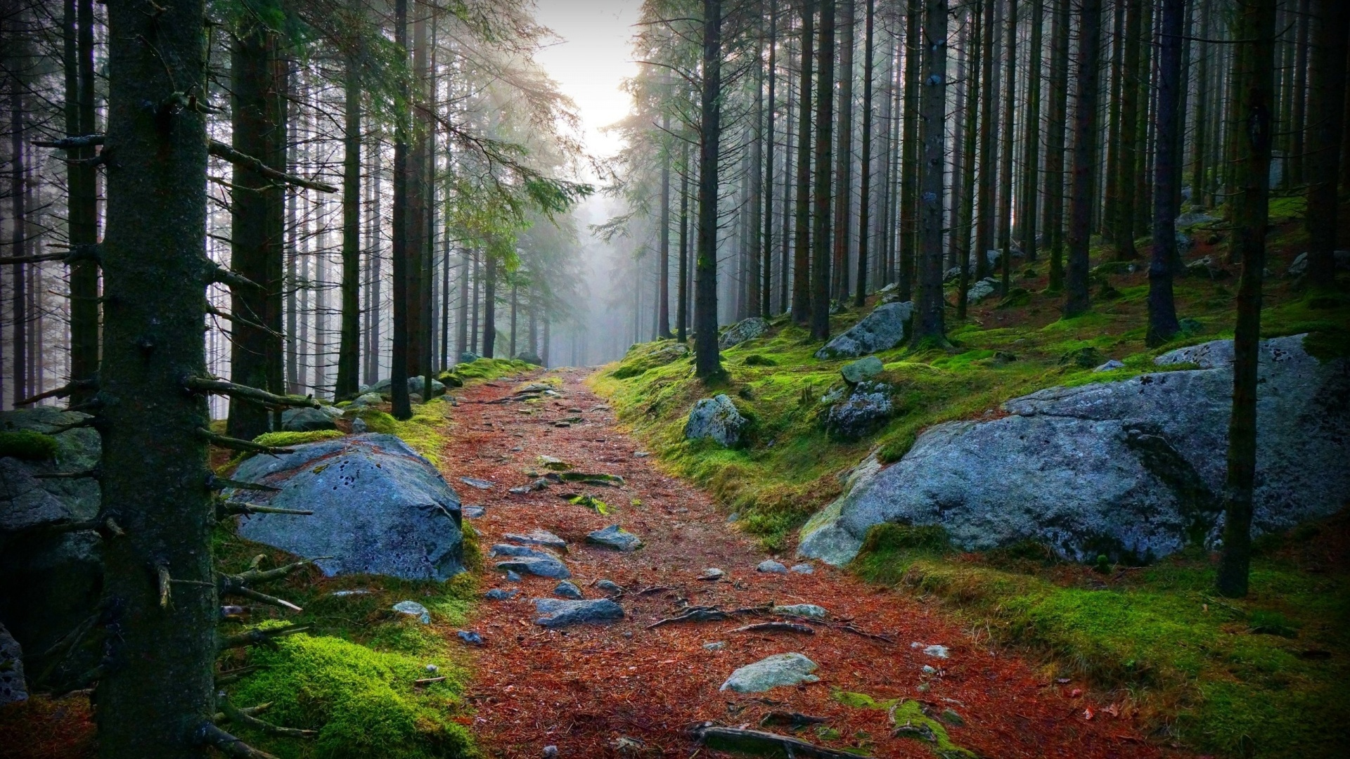 1920x1080 forest red path rocks foggy desktop pc and mac wallpaper