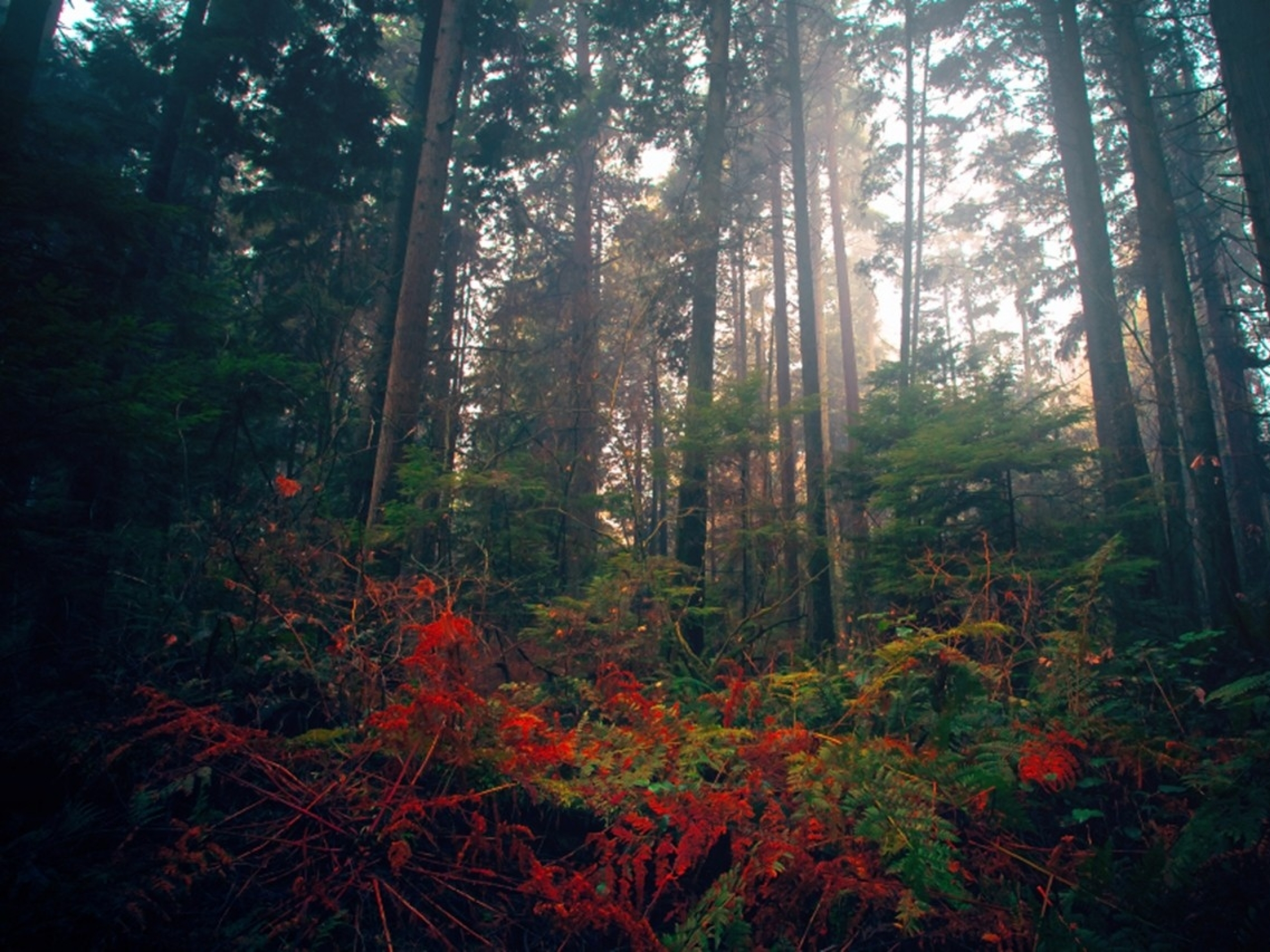 forest flowers wallpapers - photo #19