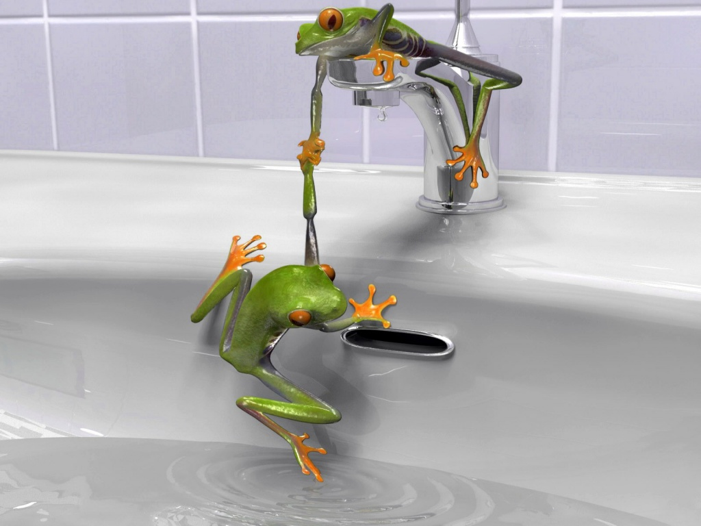 1024x768 Frogs in the sink