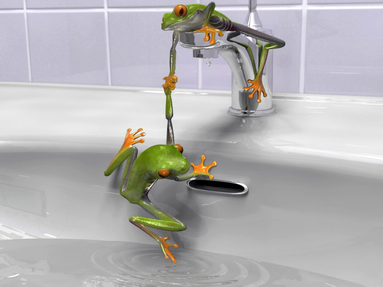 1280x720 Frogs in the sink