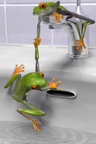 320x480 Frogs in the sink
