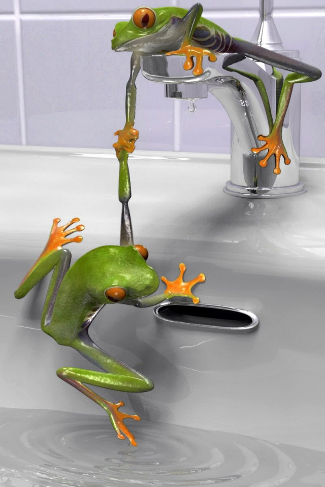 640x960 Frogs in the sink