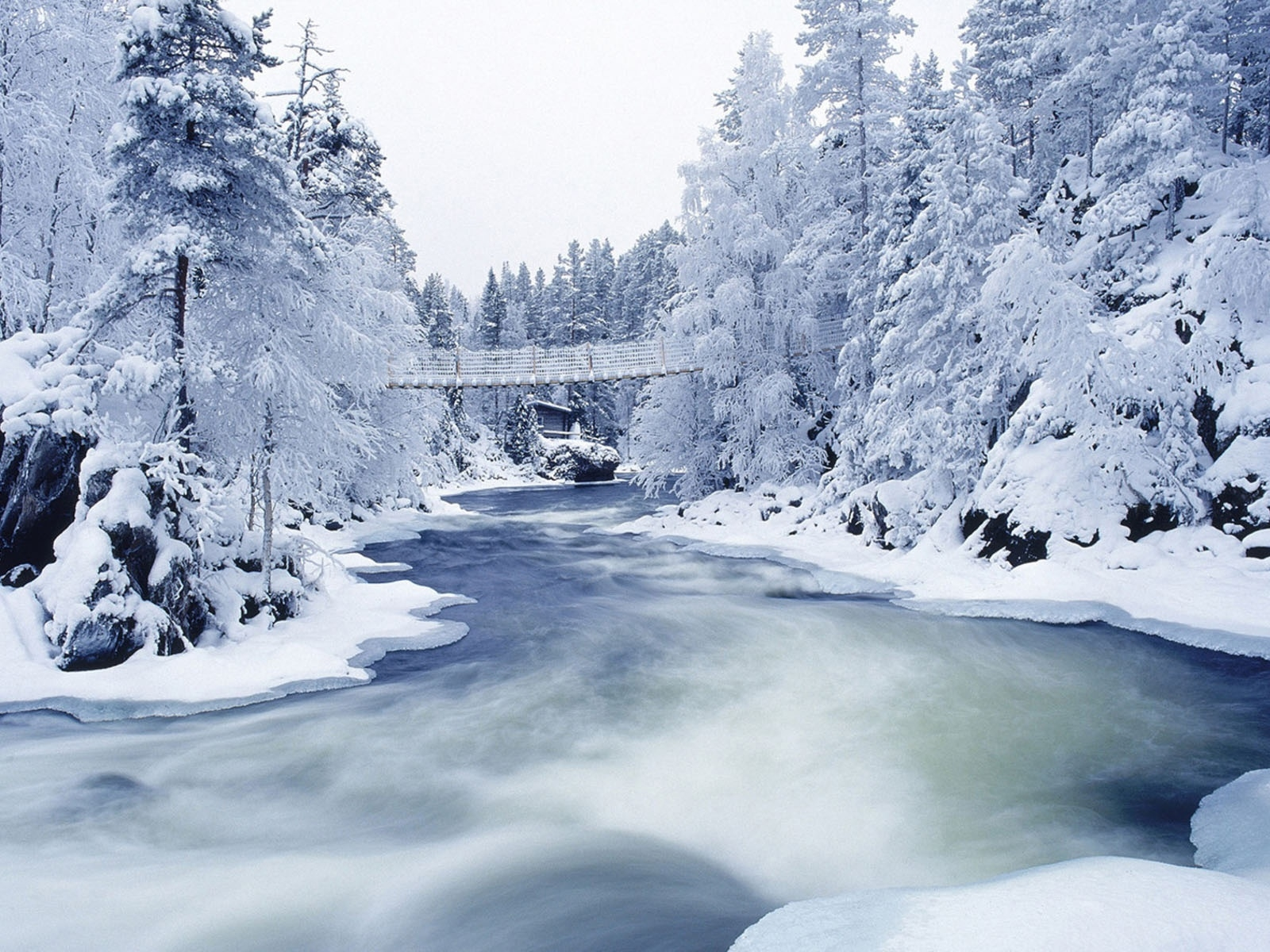 Frozen River And Trees Wallpapers