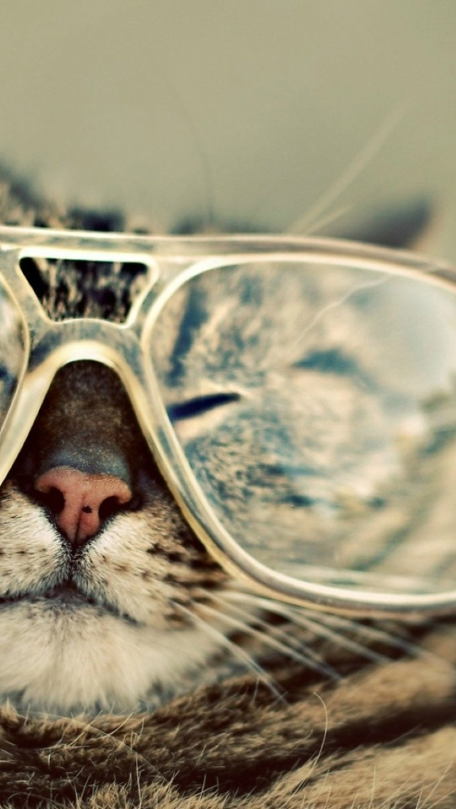 640x1136 Funny Cat With Glasses Iphone 5 Wallpaper