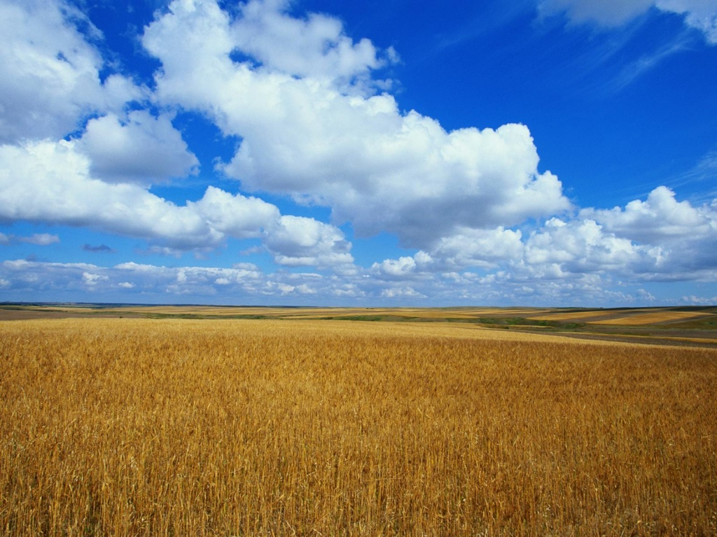 1024x768 golden field 2 desktop pc and mac wallpaper