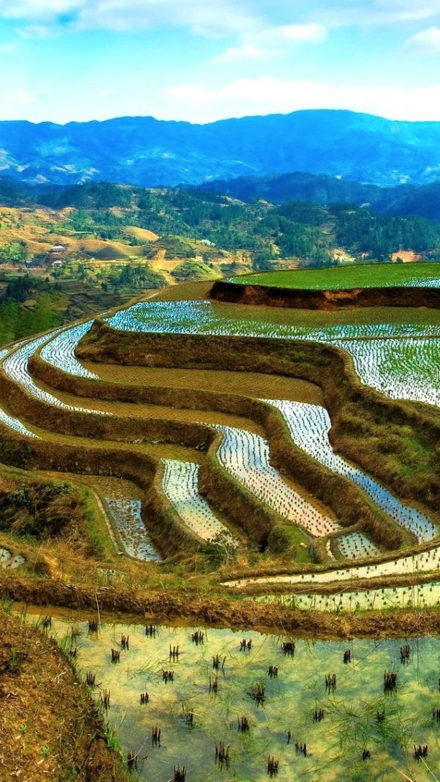 640x1136 graceful rice terraces iphone 5 wallpaper for Wallpaper home philippines