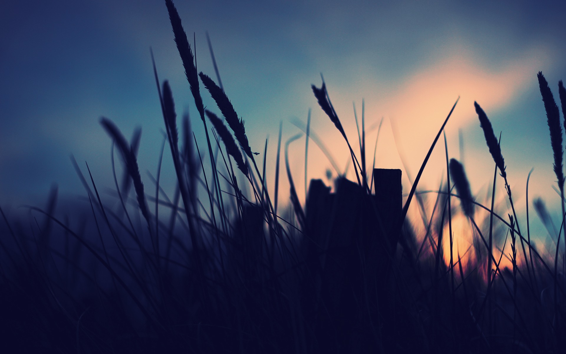 Grass, Sunset wallpaper