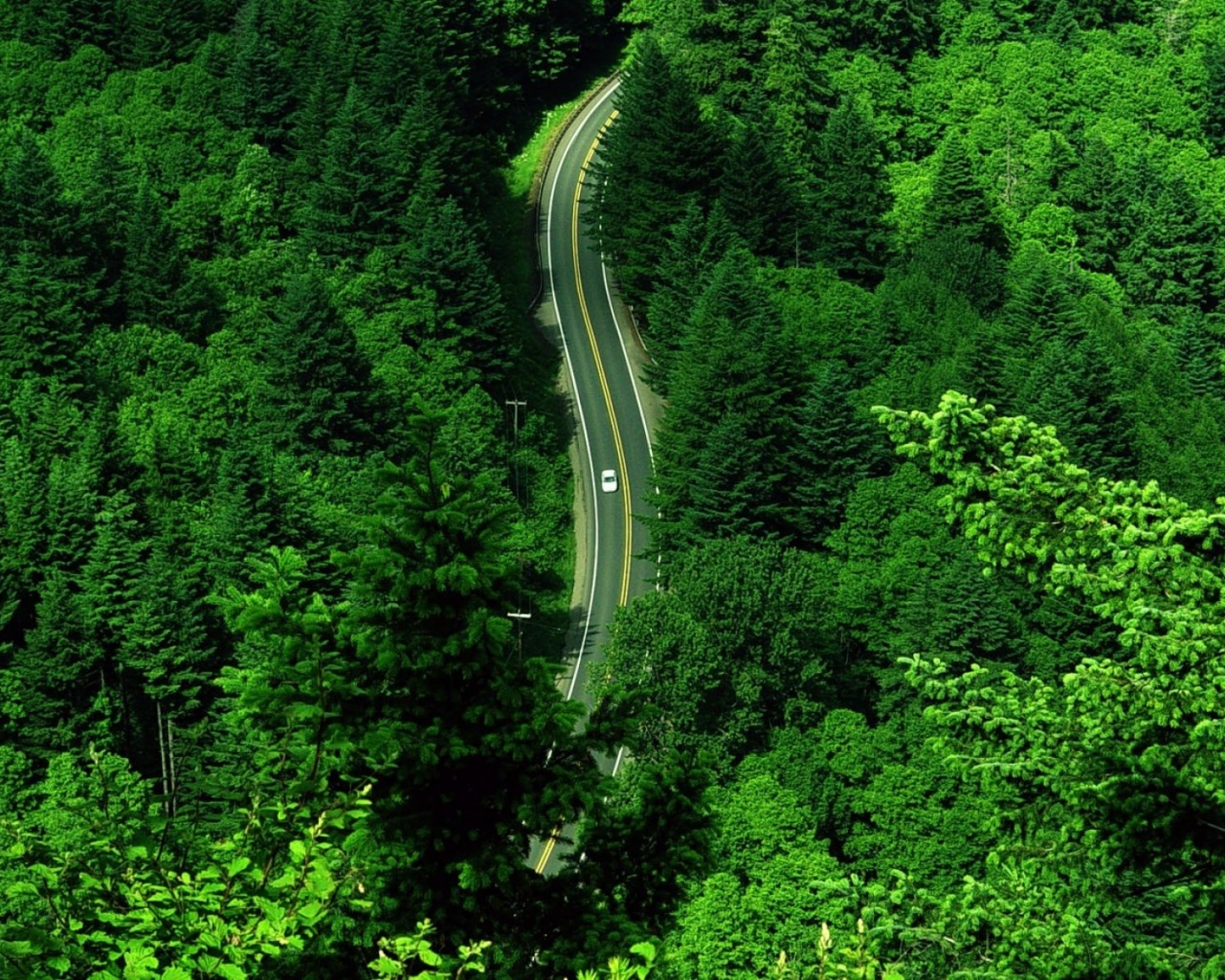 nature, Aerial view, Road, Trees, Forest Wallpapers HD / Desktop ...