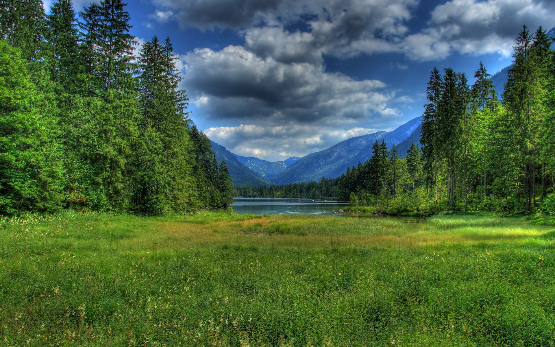 Grass Green Trees Meadow Lake Wallpapers Grass Green
