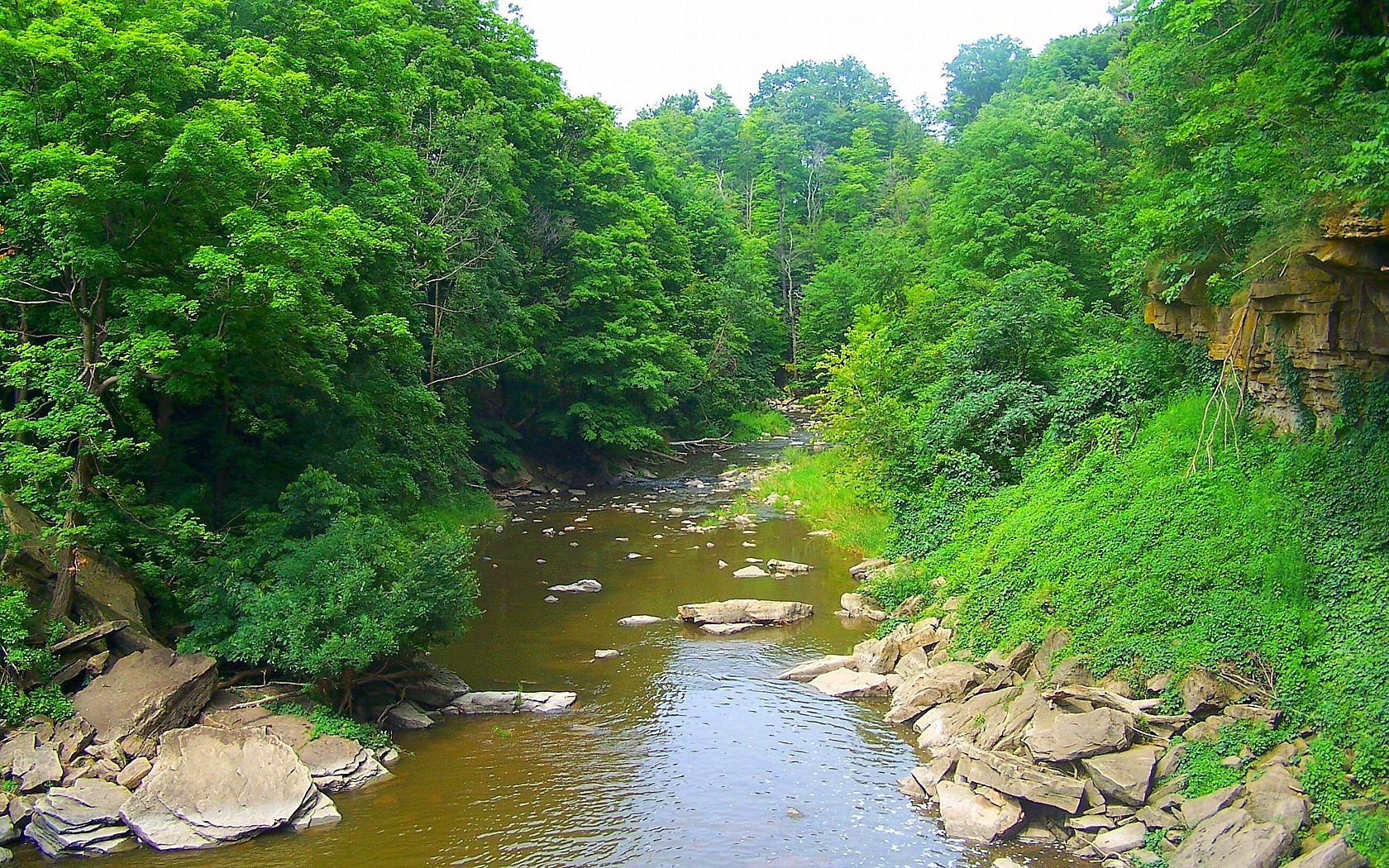 grass green trees river stones wallpapers