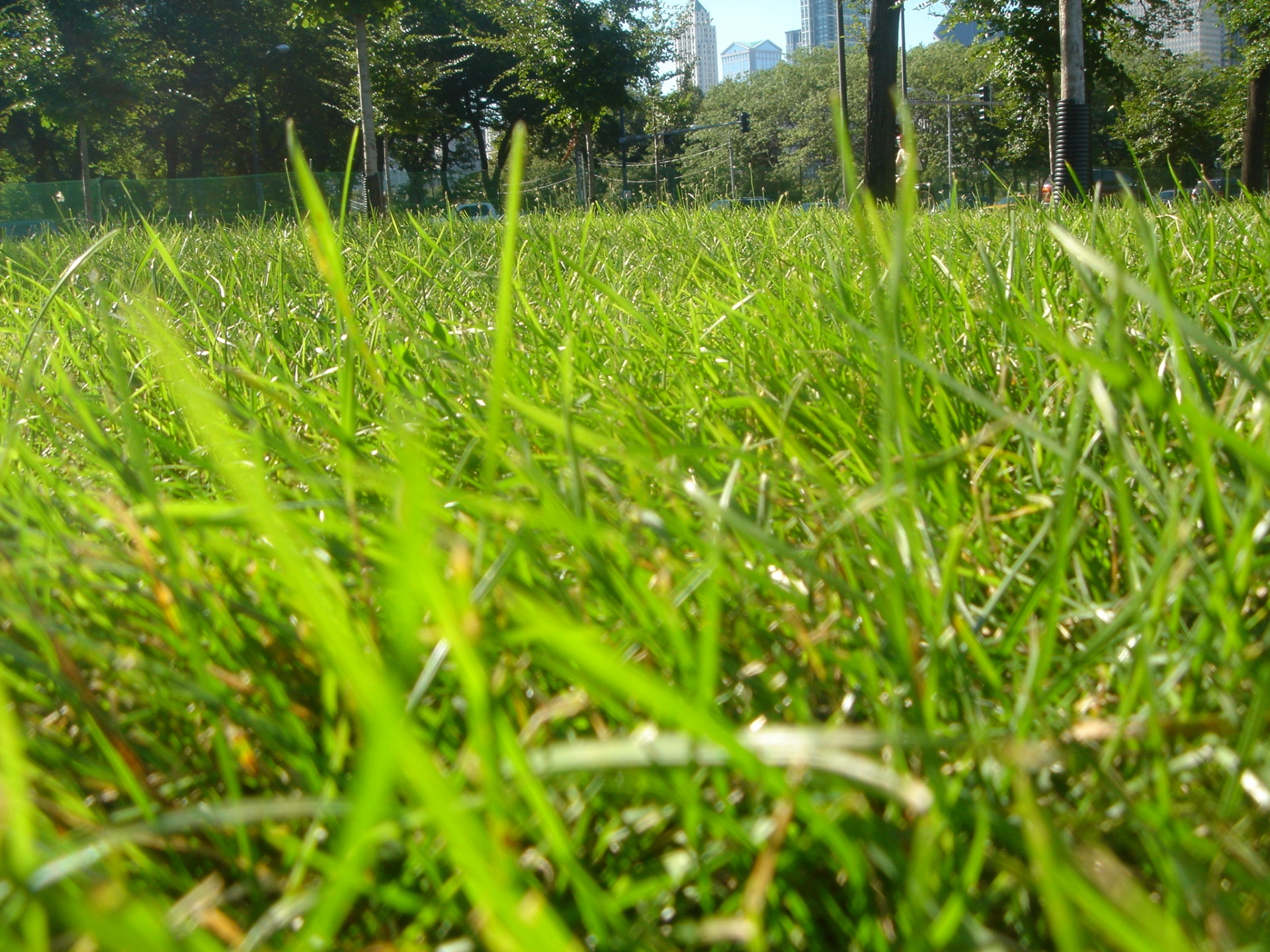 Grass In Park Wallpapers Grass In Park Stock Photos