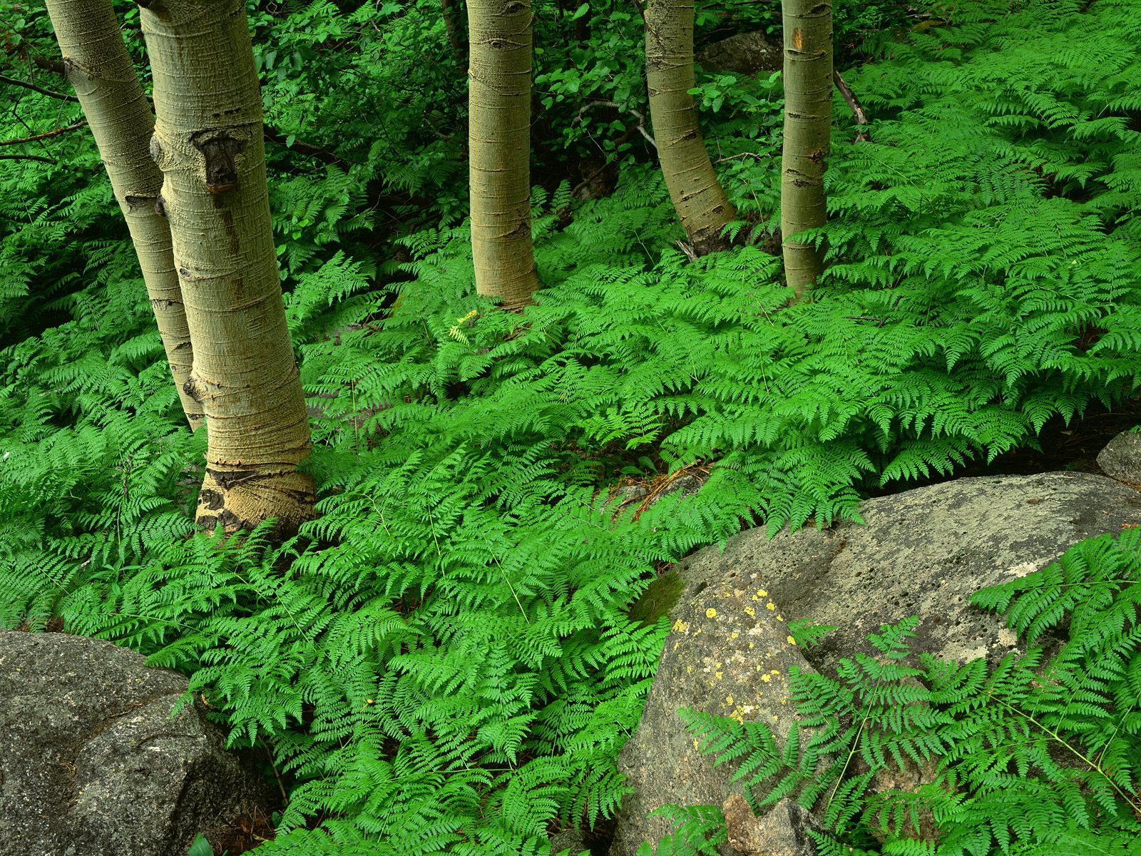 1600x1200 green contrast forest desktop pc and mac wallpaper