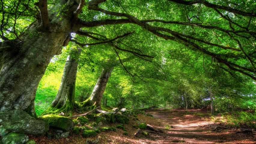 852x480 Green Forest Amp Path Desktop Pc And Mac Wallpaper