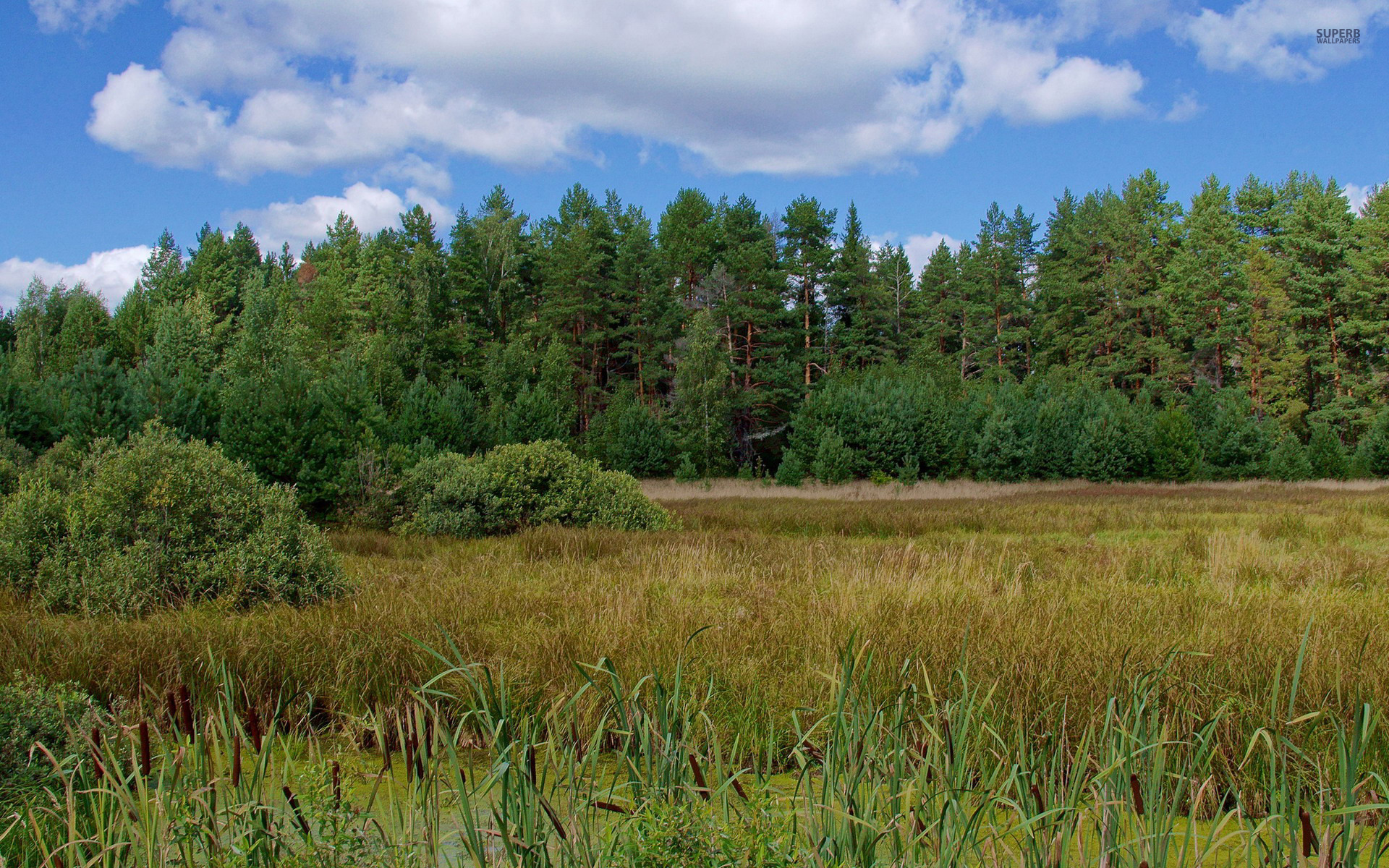 green forest pond grass bushes wallpapers green forest