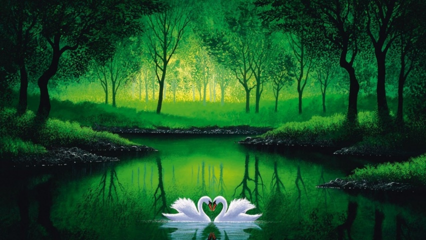 852x480 Green Forest Pond Swans Couple