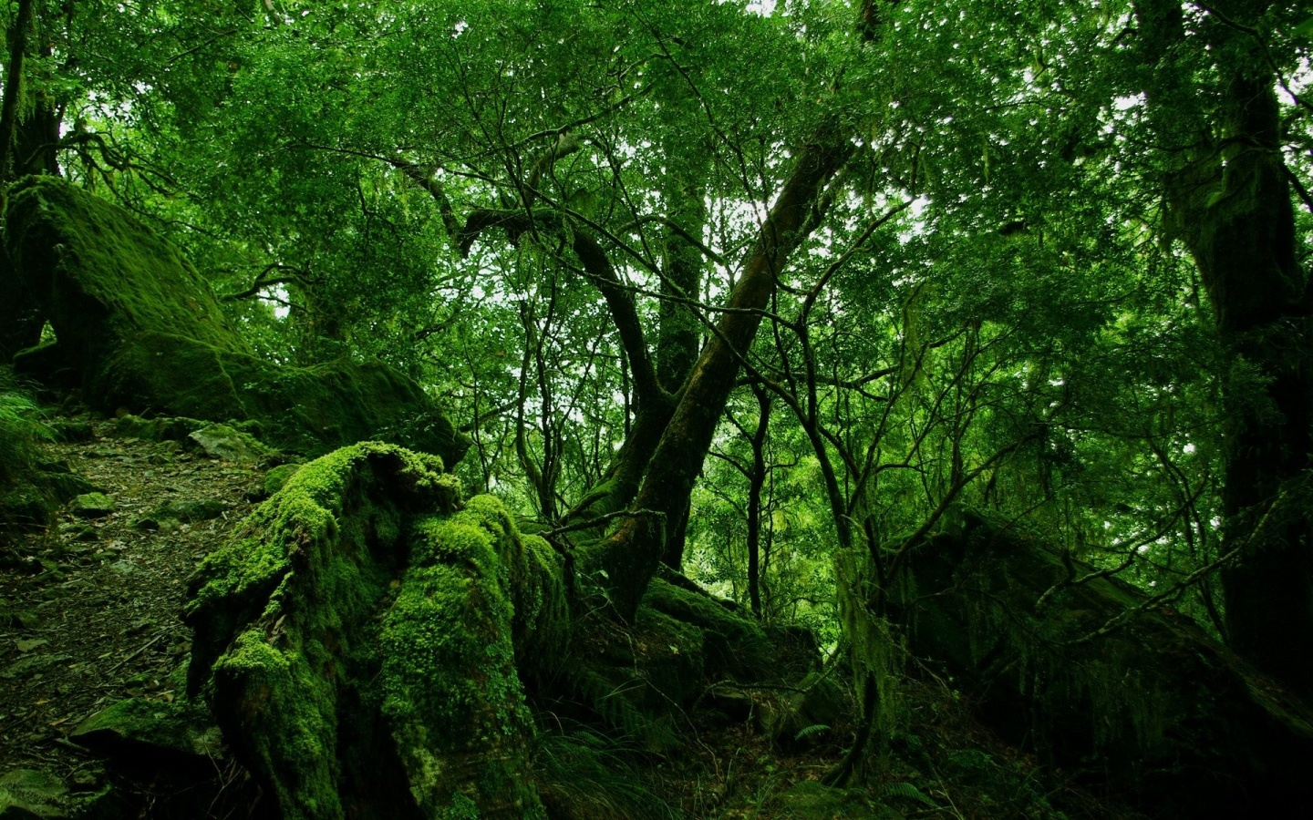 1440x900 Green forest vegetation