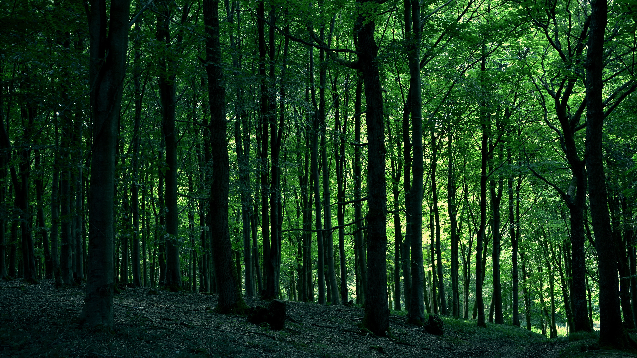 2560x1440 Green Forest Desktop Pc And Mac Wallpaper