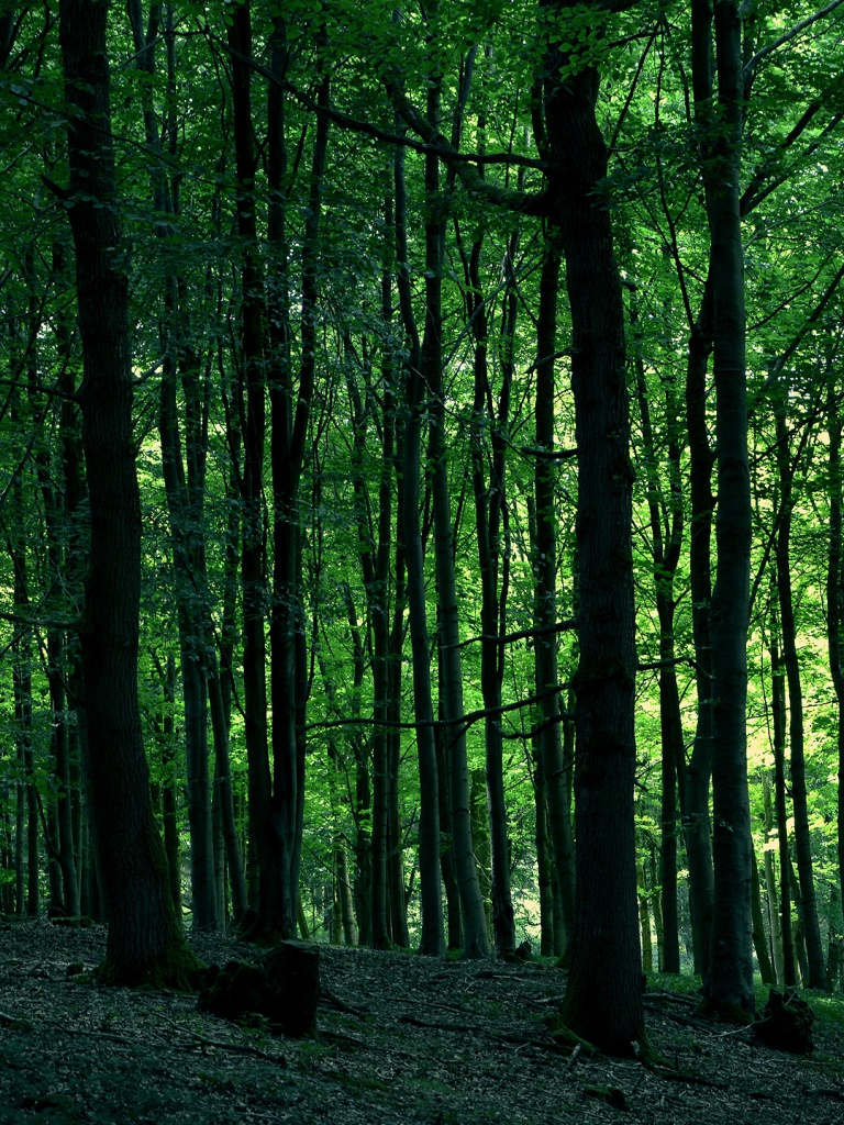 Green Forest Ipad Mini wallpapers 45306 768x1024 1 on ipad mini